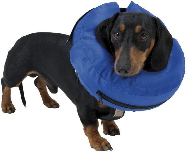 Image result for kissan ja koiran kauluri